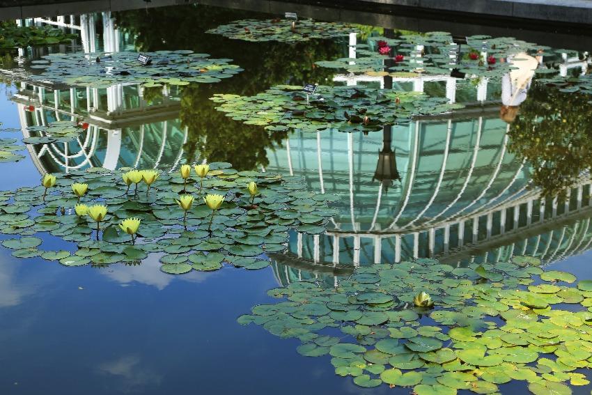 Tickets for brooklyn botanic garden weekend admission in - Brooklyn botanical garden free admission ...