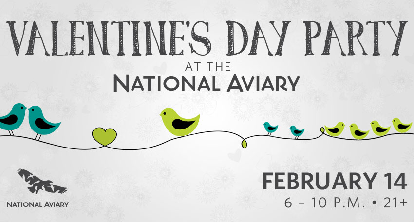 Tickets for Valentine's Party at the National Aviary in Pittsburgh from ShowClix
